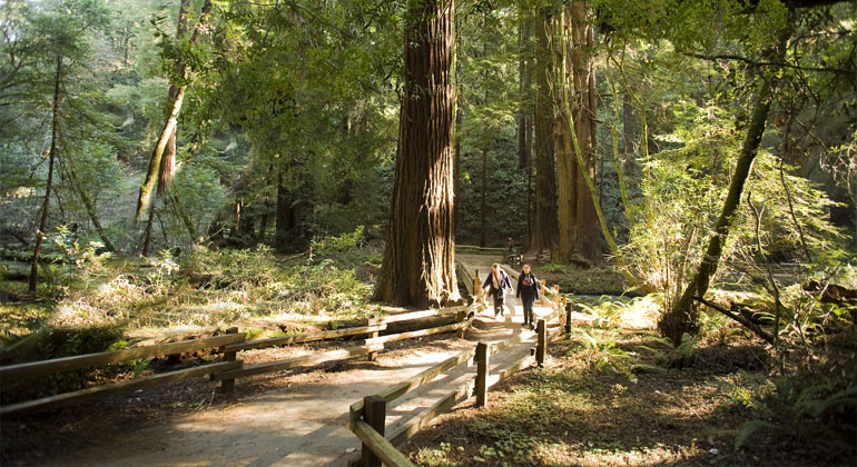 private Muir Woods and Marin tours